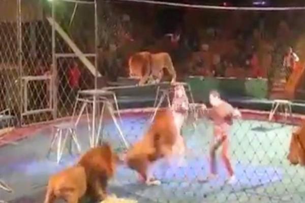 Βίντεο - σοκ που κόβει την ανάσα: Λιοντάρια επιτίθενται στον εκπαιδευτή τους σε τσίρκο!