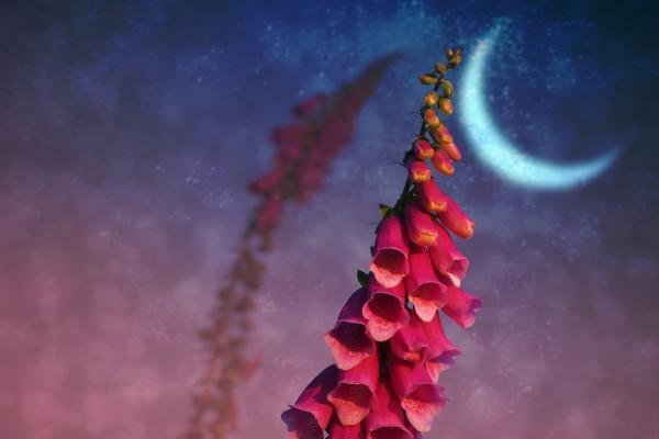 Τα Ζώδια & η Νέα Σελήνη στο Κριό 2017 by MagicF'Ariel!
