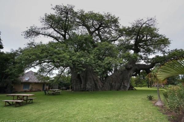 Κανείς δεν πίστευε αυτό που υπήρχε μέσα στο δέντρο! Μέχρι που είδαν τις φωτογραφίες…
