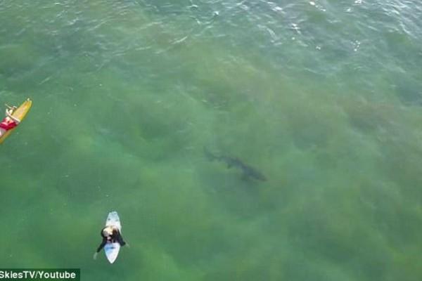 Βίντεο που κόβει την ανάσα: Τεράστιος γκρίζος καρχαρίας καραδοκεί κάτω από ανυποψίαστους σέρφερ και προκαλεί τρόμο! (video + photos)