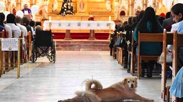Τρίκορφο: Αδέσποτο σκυλί έκανε Ανάσταση μέσα στην Αγία Παρασκευή! (video)