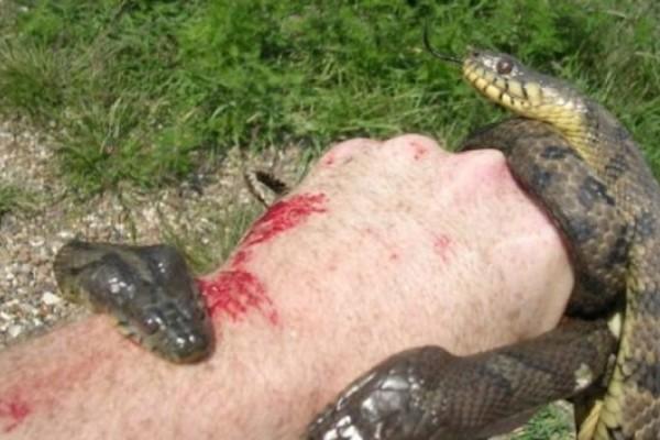 Σε δάγκωσε φίδι; Δες τι πρέπει να κάνεις! Σώζει ζωές