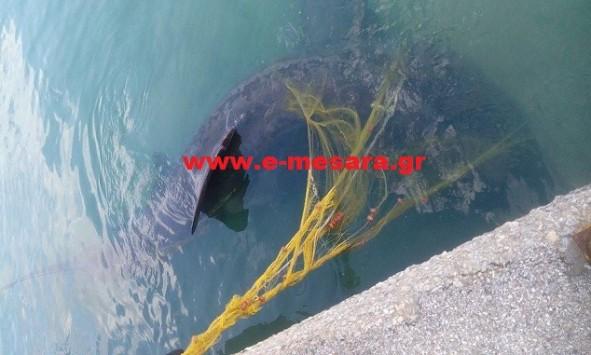 Απίστευτο: Κοίταξε τα δίχτυα του και είδε αυτόν τον τεράστιο καρχαρία!