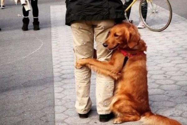 Το γνωρίζατε; Έτσι θα καταλάβετε ότι ένας σκύλος θέλει να σας ζητήσει συγνώμη!