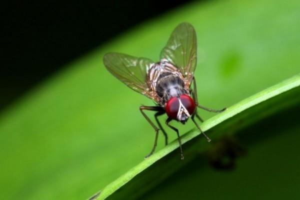 4 φυσικοί τρόποι για να απαλλαγείτε μια για πάντα από τις μύγες! Ο δεύτερος θα σας ξετρελάνει
