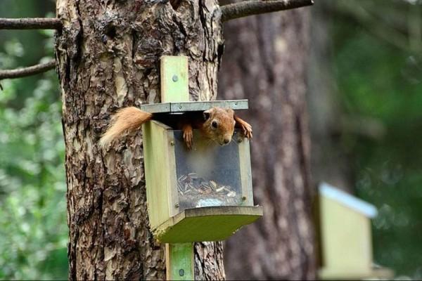 Η φωτογραφία της ημέρας: Η βάναυση καθημερινότητα ενός... σκίουρου!