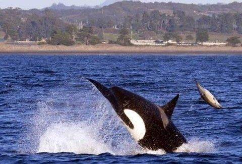 Υπέροχο θέαμα: Δελφίνια εμφανίστηκαν στον Κορινθιακό και μάγεψαν κόσμο! (Video)