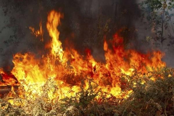 Ισχυρή πυρκαγιά στην Αργολίδα απειλεί κατοικημένη περιοχή!