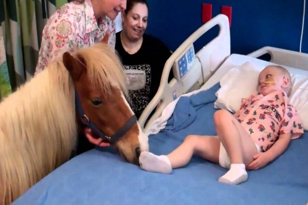 Συγκινητικό! Πώς αντέδρασε ένα μικρό άρρωστο παιδάκι όταν είδε μπροστά του ένα... άλογο (Video)