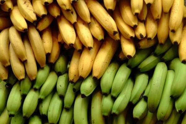 Η σοκαριστική αποκάλυψη για τις μπανάνες που δεν γνώριζε κανείς μέχρι σήμερα!