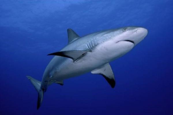 Συγκλονιστικό: Καρχαρίας ορμάει σε κλουβί με δύτη και... (Video)