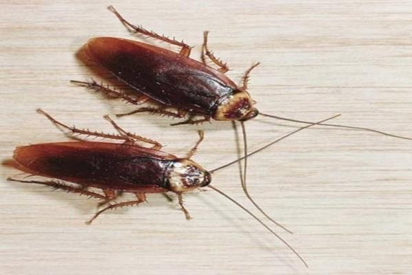 Πώς μπορείτε με 3 απλά βήματα να ξεφορτωθείτε τις κατσαρίδες