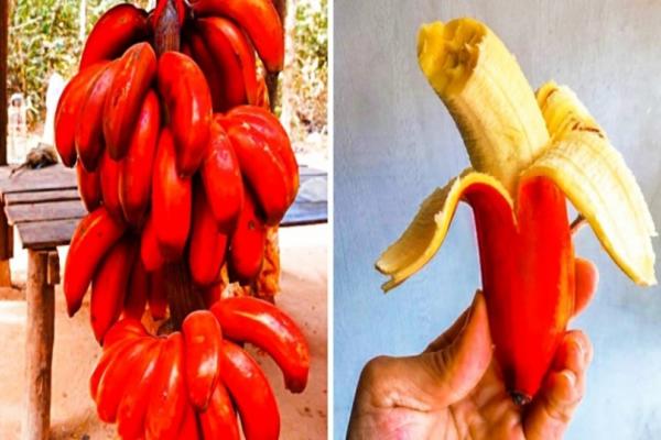 Κι όμως υπάρχουν: Η κόκκινη μπανάνα και άλλα εξωτικά φρούτα που δεν φανταζόσασταν ότι θα δείτε ποτέ! (Photos)