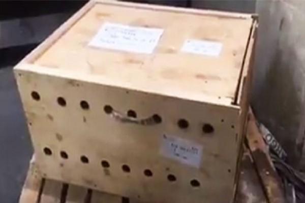 Λίβανο: Παράτησαν ένα ξύλινο κουτί στο αεροδρόμιο και 7 μέρες μετά έπαθαν την πλάκα τους με αυτό που αντίκρισαν (Photo & Video)