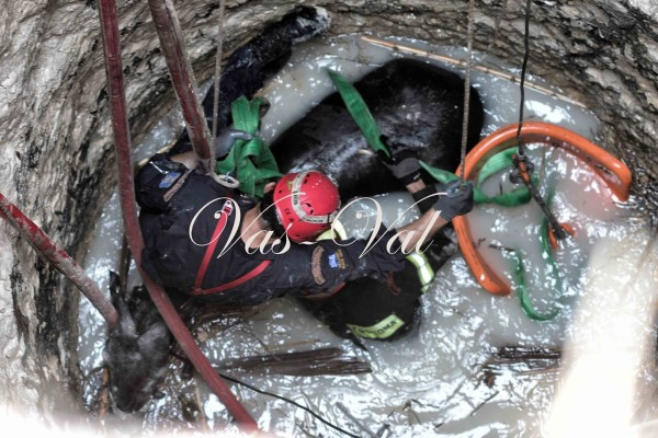 Κορινθία: Δραματική διάσωση αλόγου που έπεσε σε πηγάδι! (photos+video)