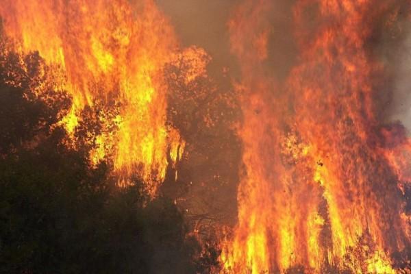 Ισχυρή πυρκαγιά στην Πελοπόννησο! Απειλεί σπίτια... (photos)