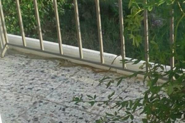 Φίδι στα Φάρσαλα ανέβηκε μέχρι τον... 2 όροφο πολυκατοικίας!