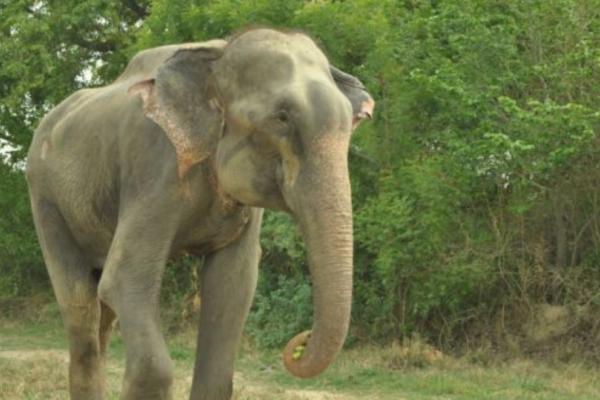 Άφησαν αυτό τον ελέφαντα ελεύθερο μετά από 50 χρόνια σκλαβιάς! Η αντίδραση του θα σας συγκινήσει! (Photos)