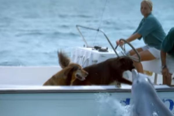Θα λιώσετε! Δελφίνι πλησιάζει αυτό το σκάφος για να φιλήσει δυο σκυλάκια (video)