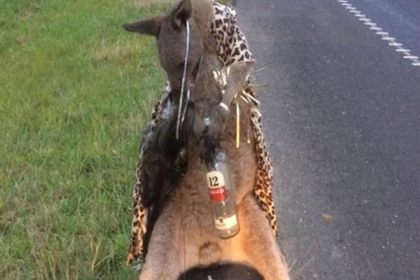 Τραγικό: Σκότωσαν καγκουρό στην Αυστραλία και το έβαλαν να κρατάει ελληνικό ούζο!