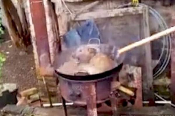 Σκληρές εικόνες: Φρίκη προκαλούν οι Κινέζοι που μαγείρευαν ζωντανό σκύλο! (Video)