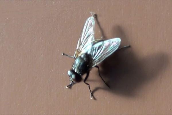 Τέλος στον εφιάλτη: 4 τρόποι για να ξεφορτωθείτε τις ενοχλητικές μύγες!