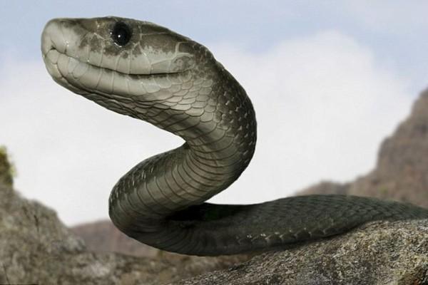 SOS: Τι πρέπει να κάνετε αν σας τσιμπήσει φίδι!