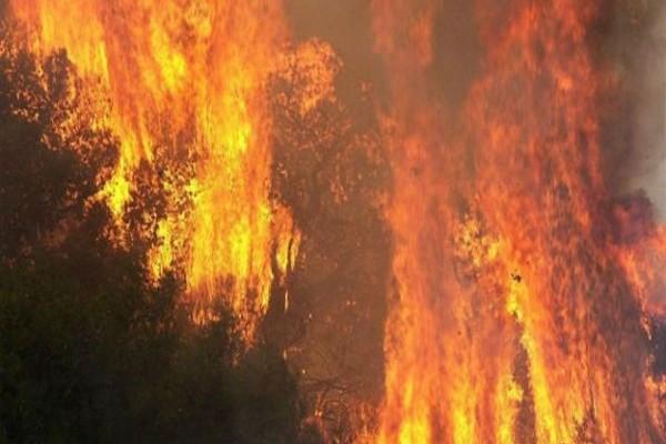 Συμβαίνει τώρα: Μεγάλη φωτιά έχει ξεσπάσει στην Πελοπόννησο!