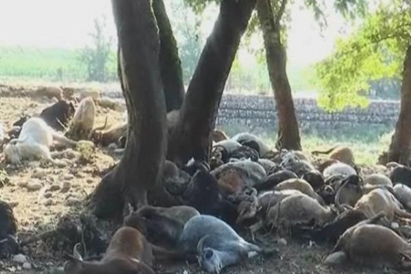 Νεκροταφείο: Κεραυνός σκότωσε ολόκληρο κοπάδι στα Άγραφα!