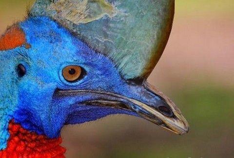 Μοναδική ανακάλυψη που ανατρέπει δεδομένα αιώνων: Βρήκαν αυτούσιο πτηνό 99 εκατ. ετών!
