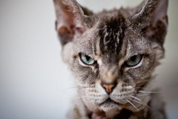Εσείς το είχατε σκεφτεί ποτέ; - Γιατί οι γάτες κουβαλάνε στο σπίτι τα θηράματά τους;