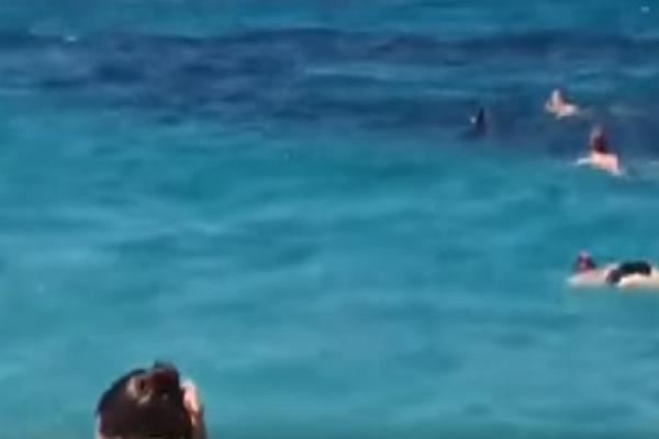 Το δελφίνι που αναστάτωσε την Σκόπελο! - Χαμός επικράτησε στην παραλία (Video)
