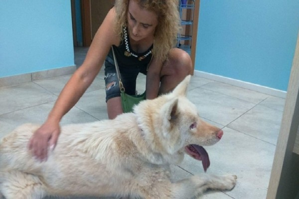 Η συγκινητική ιστορία του τυφλού σκύλου που τον εγκατέλειψαν στο Κορωπί και βρήκε τον... φύλακα άγγελο του! (Photo)