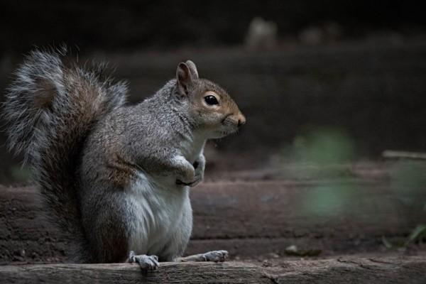 Η φωτογραφία της ημέρας: Ένας γλυκύτατος σκίουρος μας φτιάχνει την μέρα!