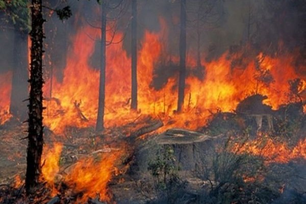 Πυρκαγιά στην Ηλεία: Μία ανάσα από την Αρχαία Ολυμπία οι φλόγες!