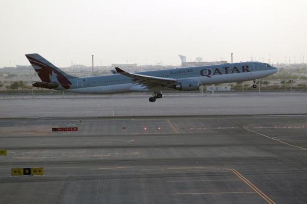 Κατάρ: Αεροπορικώς έφτασαν αγελάδες στο εμιράτο!