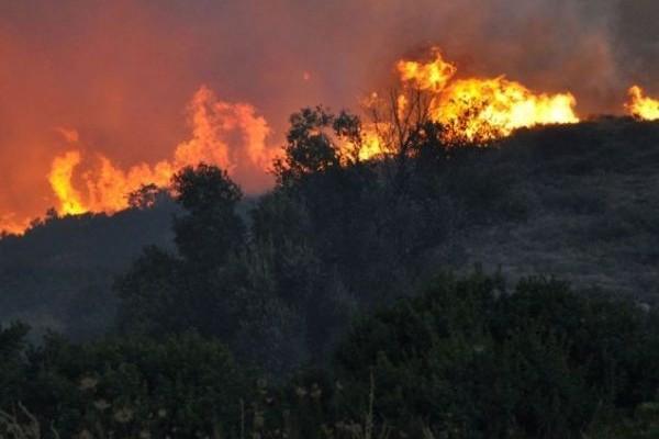 Συναγερμός στην πυροσβεστική: Πυρκαγιά καίει σε περιοχή της Ηλείας - Δείτε φωτογραφίες (Photos)