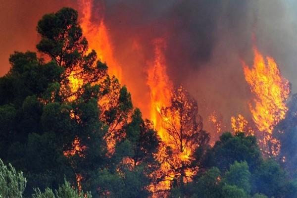 Μαίνεται η φωτιά που ξέσπασε στον Πύρριχο Λακωνίας - Περίπου 6 χιλιόμετρα από την Αρεόπολη