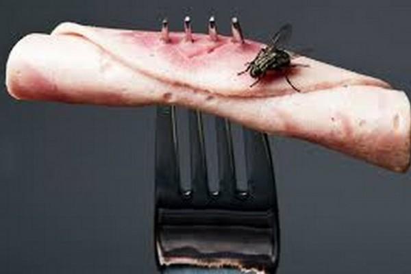 Αν αγγίξει μία μύγα το φαγητό σας θα συνεχίσετε να τρώτε. Σωστά; Δείτε τι συμβαίνει όμως... (Video)
