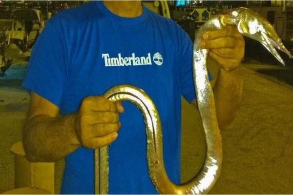 Τι έπιασε ο άνθρωπος: Το τεράστιο ψάρι - φίδι που έβγαλε ο τύπος αυτός στο Ναύπλιο! (Photos)
