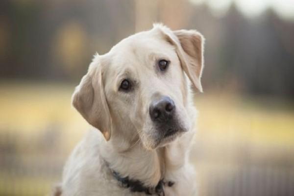 Αυτός είναι ο λόγος που οι σκύλοι γέρνουν το κεφάλι τους όταν τους μιλάμε! - Εσείς το ξέρατε;