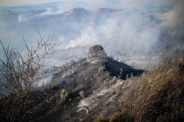 Χωρίς ενεργά μέτωπα οι τρεις πυρκαγιές σε Ζάκυνθο, Κάλαμο, Ηλεία που προκάλεσαν μεγάλες καταστροφές