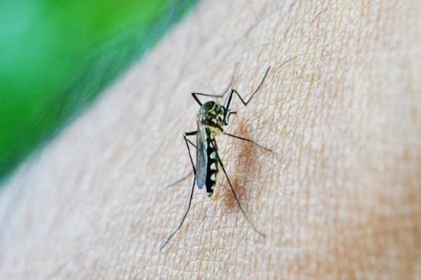 Γιατί τα κουνούπια τσιμπούν κάποιους ανθρώπους περισσότερο από άλλους;