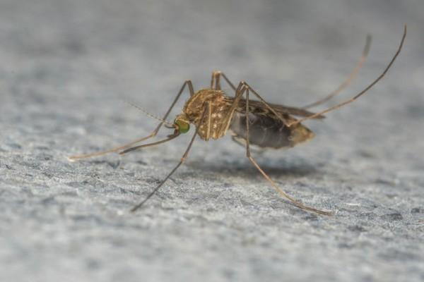 Συναγερμός στην Αργολίδα: Και άλλη νεκρή από τον ιό του Δυτικού Νείλου