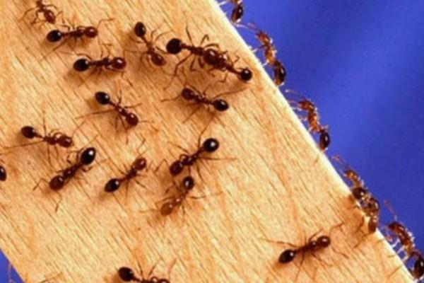 Πώς να απαλλαγείς από τα μυρμήγκια στο σπίτι με 6 απλές και φυσικές λύσεις;