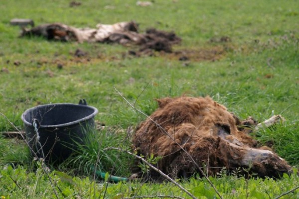 Φρικιαστικές εικόνες από ζωολογικό κήπο της χώρας: Ζώα λιμοκτονούν δίπλα σε κουφάρια άλλων ζώων!