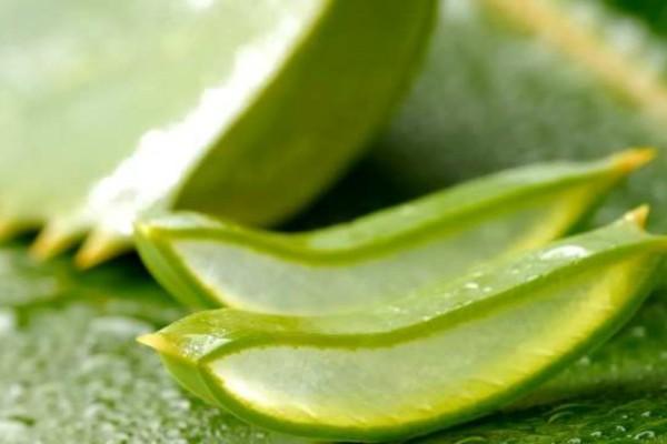 Τα πολύτιμα οφέλη της αλόης στην υγεία! Εκτός από το δέρμα κάνει καλό και στα...