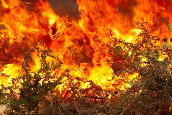 Νέα ισχυρή πυρκαγιά στην χώρα! Μεγάλη μάχη με τις φλόγες
