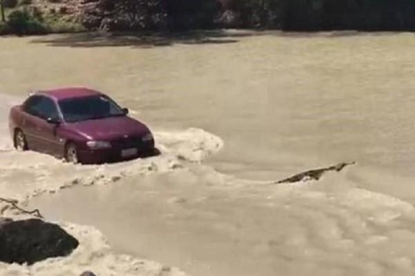 Επικό βίντεο: Οδηγός κορνάρει σε… κροκόδειλο για να τον προσπεράσει!