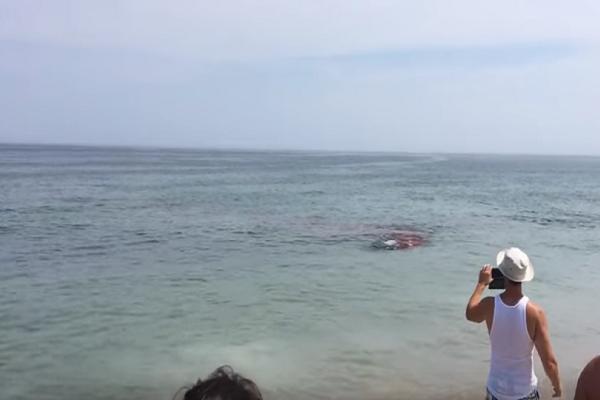 Τρομακτικό βίντεο: Καρχαρίας «σκόρπισε» τον πανικό σε παραλία της Μασαχουσέτης!